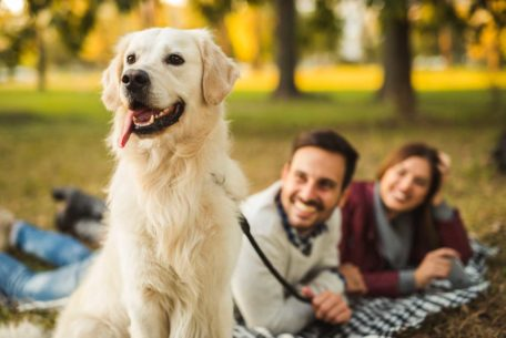 Couple enjoying time spent with dog in the park.