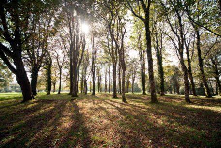 woodland, trees